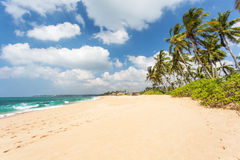 Sandy beach with palm trees. On the ocean. Sri Lanka Stock Photography