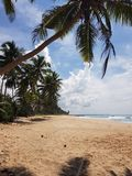 Sandy beach with palm trees royalty free stock images