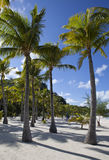 Sandy beach and palm trees. In a sunny day Royalty Free Stock Images
