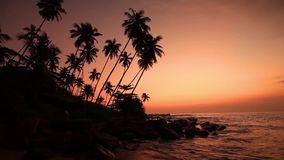 Sandy beach with palm trees at sunset stock footage