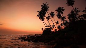 Sandy beach with palm trees at sunset stock video