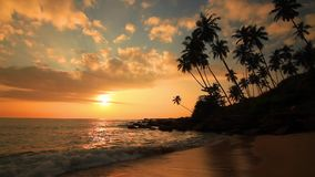 Sandy beach with palm trees at sunset stock video footage