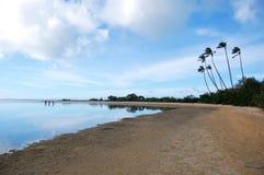 Sandy beach with palms Stock Image