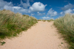 Lush sandy beach path. Footpath through sand dunes. Summer vacation concept Royalty Free Stock Image