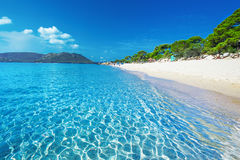 Sandy beach with pine trees and azure clear water, Corsica, Fran Stock Images