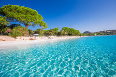 Sandy beach with pine trees and azure clear water, Corsica, Fran Royalty Free Stock Images