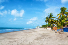 Sandy Beach in Same, Ecuador. Long stretch of sandy beach lined by palm trees in Same, Ecuador Royalty Free Stock Image