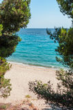 Sandy beach seen through pine trees Stock Photography