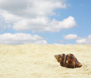 Sandy beach with shell. Sandy beach with clouds and shell Stock Image