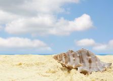 Sandy beach with shell. Sandy beach with clouds and shell Stock Photos