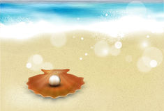 Sandy beach with shell Royalty Free Stock Photo