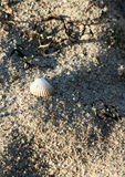 Sandy Beach. Shell in the sunset Stock Photo