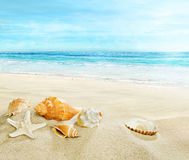 Sandy beach with shells. royalty free stock image