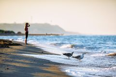 Sandy beach shoreline with seagulls drinking water at sunset. Beautiful sea landscape with breaking waves and woman on background. Anapa, Russia stock photos