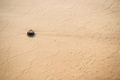 Sandy beach with single pebble Stock Images