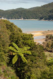 Sandy beach at Tonga Bay in Abel Tasman Royalty Free Stock Images