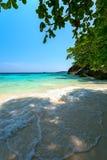 Sandy beach tree sea Royalty Free Stock Photography