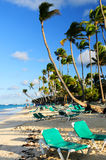 Sandy beach of tropical resort. With palm trees and reclining chairs Royalty Free Stock Image