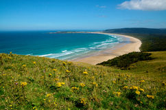 Sandy beach with yellow flower hillside Stock Images