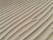 The sandy beaches of Fuerteventura at low tide Stock Image
