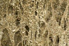 Sandy-Boden mit verdrehten Wurzeln der Flussuferanlagen lizenzfreie stockfotografie