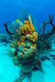 Sandy bottom of Caribbean sea with corals and fishes Stock Photos