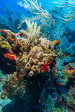 Sandy bottom of Caribbean sea with corals and fishes Royalty Free Stock Photo