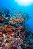 Sandy bottom of Caribbean sea with corals and fishes Stock Photo