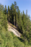 Sandy breakage with dense forest Royalty Free Stock Images