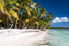 Sandy Caribbean Beach with Coconut Palm Trees. Saona Island, Dominican Republic Royalty Free Stock Images