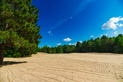 Sandy Clearing in Forest Landscape Scene. A large and expansive sand covered clearing opens out in the middle of an evergreen forest Stock Images