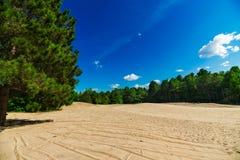 Sandy Clearing i Forest Landscape Scene Arkivbilder
