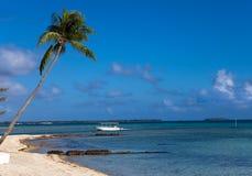 Dark blue sea with a palm tree Stock Image