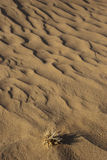 Sandy corrugation. In the Arabian Desert Stock Photography