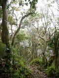 Sandy Cruz slinga, Saba Royaltyfria Bilder