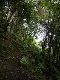 Sandy Cruz slinga, Saba Arkivbild