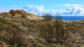 Sandy-Dünen der baltischen Küste Stockbild
