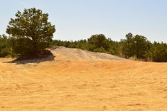 New Jersey pine barrens Royalty Free Stock Images
