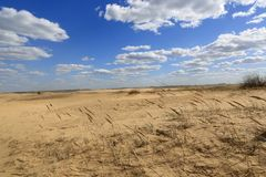 Nice clouds in sandy desert. Sandy desert landscape with nice clouds Stock Image