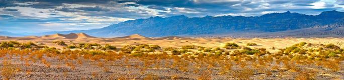 Sandy desert Royalty Free Stock Photos
