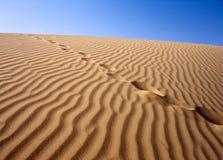 Sandy desert, Sahara Stock Image