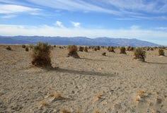 Sandy desert and shrub at Devils Cornfield, Death Valley National Park stock photos