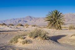 Sandy desrt near Eilat, Israel Royalty Free Stock Photography