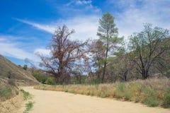 Sandy Dirt Road in Wilderness Stock Photos