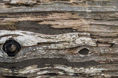 Sandy Driftwood Log - Background stock image