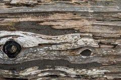 Sandy Driftwood Log - fondo Immagine Stock
