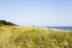 Sandy dune covered with the grass Royalty Free Stock Image