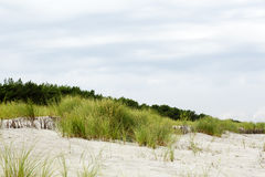 Sandy dune covered with the greenery Stock Photos