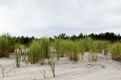 Sandy dune covered with the greenery Stock Image
