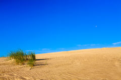 Sandy dune with plants and sky. Royalty Free Stock Image